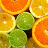 citrusfrukter Arkivfoto