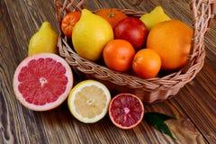 Citrusfrukter - apelsiner, citroner, tangerin, grapefrukt Royaltyfri Bild