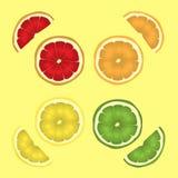 Citrusfrukter i ett snitt skiva en uppsättning av citronen, limefrukt, apelsinen och grapefrukten vektorteckningsillustration eps stock illustrationer