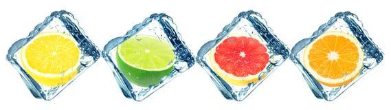 Citrusfrukter och iskuber Arkivbild