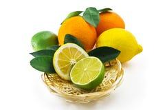 Citrusfrukter på en vit bakgrund Royaltyfri Fotografi