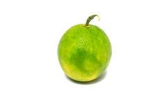 Citrusfrukter vit bakgrund Royaltyfria Bilder