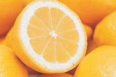 Citrusfruktskivor royaltyfri foto