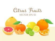 Citrusfruktstilleben också vektor för coreldrawillustration Fotografering för Bildbyråer