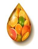 Citrusfruktsymbol vektor illustrationer