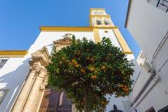Citrusträd med apelsiner och kyrka på en bakgrund marbella spain arkivfoto