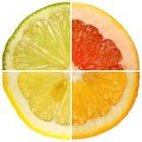 Citrusvrucht. Stock Afbeelding