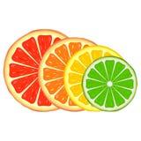 Citrusvrucht Royalty-vrije Stock Fotografie