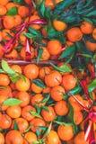 citrusvrucht Verse organische Mandarijnen in een doos op vertoning bij een landbouwer Stock Fotografie