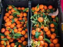 citrusvrucht Verse sinaasappelen in een doos op vertoning bij een landbouwersmarkt of Royalty-vrije Stock Fotografie