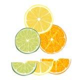 Citrusvruchten royalty-vrije illustratie
