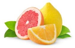 Citrusvruchten Royalty-vrije Stock Afbeeldingen