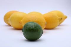 Citrusvruchten: kalk en citroen Stock Afbeeldingen
