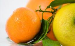 Citrusvruchten - Mandarine Royalty-vrije Stock Foto's