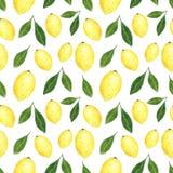 Citrusvruchten naadloos die patroon van citroenen wordt gemaakt Hand getrokken waterverfillustratie royalty-vrije illustratie