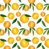 Citrusvruchten naadloos die patroon van sinaasappelen en bladeren wordt gemaakt Hand getrokken waterverfillustratie stock illustratie