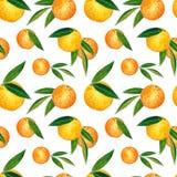Citrusvruchten naadloos die patroon van sinaasappelen en bladeren wordt gemaakt Hand getrokken waterverfillustratie royalty-vrije illustratie