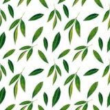 Citrusvruchten naadloos die patroon van sinaasappelenbladeren wordt gemaakt Hand getrokken waterverfillustratie royalty-vrije illustratie