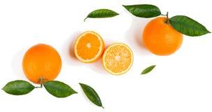 Citrusvruchten - sinaasappelen Royalty-vrije Stock Afbeelding