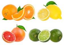 Citrusvruchten Vastgestelde sinaasappel, grapefruit, kalk, geïsoleerde citroen stock afbeelding
