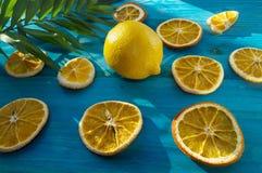 Citrusvruchtenachtergrond met palmbladdeel Stock Afbeeldingen