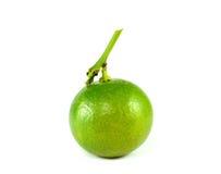 Citrusvruchtenkalk Royalty-vrije Stock Fotografie