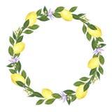 Citrusvruchtenkroon van citroenen, bloemen en bladeren wordt gemaakt dat Hand getrokken waterverfillustratie stock illustratie