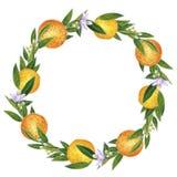 Citrusvruchtenkroon van sinaasappelen, bloemen en bladeren wordt gemaakt dat Hand getrokken waterverfillustratie stock illustratie