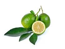 Citrusvruchtenmedica Linn op witte achtergrond Stock Afbeelding