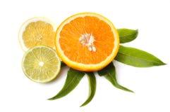 Citrusvruchtenplakken Stock Afbeeldingen