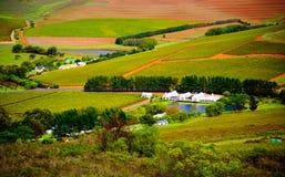 Città del Capo - Wineyards Immagini Stock Libere da Diritti
