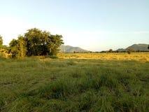 città del paese nella terra del riso di lopburi Fotografia Stock Libera da Diritti