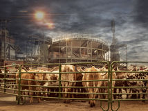 Città della mucca Immagini Stock