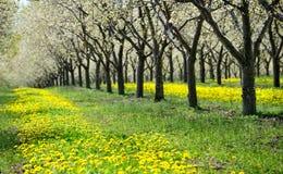 Città della traversa del frutteto di ciliegia, Michigan immagini stock