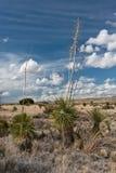 Città delle rocce, New Mexico. Immagine Stock