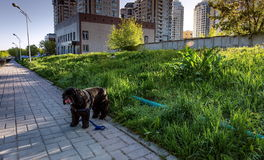 Città di Almaty Immagini Stock