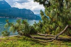 Città di Bellagio sul lago Como, Italia Regione della Lombardia Punto di riferimento famoso dell'italiano, parco di Melzi della v Immagine Stock Libera da Diritti