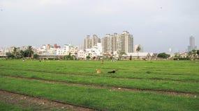 Città di Kaohsiung Fotografie Stock