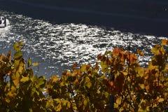 Città di Kaub con le foglie dell'uva Immagini Stock