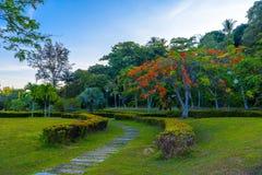 Città di Krabi, Tailandia, albero di fioritura con i fiori rossi nel parco fotografie stock