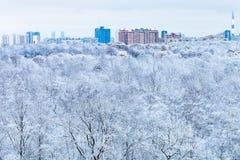 Città e foresta della neve nella mattina blu di inverno Fotografie Stock