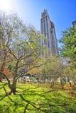 Città Hall Park degli alberi n in Lower Manhattan Immagini Stock Libere da Diritti