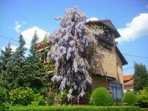 Città piacevole della casa in primavera - di Vranje fotografia stock libera da diritti