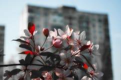 Città sovietica rosa immagine stock