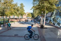 Città universitaria del UCLA Fotografia Stock Libera da Diritti