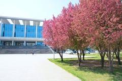 Città universitaria della primavera Immagine Stock Libera da Diritti