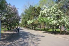 Città universitaria della primavera Fotografia Stock Libera da Diritti