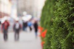 Città verde un giorno soleggiato immagini stock