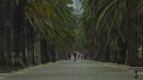 Cittadini occupati di Spezia che camminano sulla via tropicale con le colombe grige, città del porto video d archivio