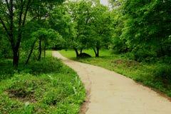 Cittadino Forest Park di Sandaoguan Immagini Stock Libere da Diritti